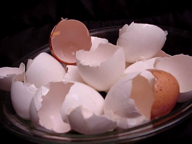 Chrush egg shells for your dog