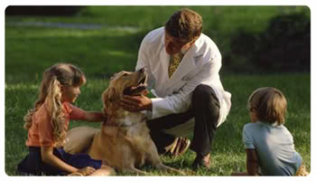 Veterinarians are around to provide the services that you may need. Where and how can you find veterinarians in your locality?