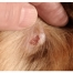What is Dog Skin Cancer?