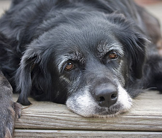 senior dog health problems