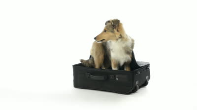 dog hiding in a suitcase