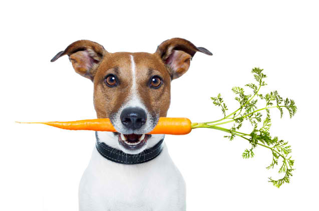 a vegan or vegetarian diet is bad for dogs
