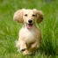 4 Things That You Should Do For Your Dog's Health