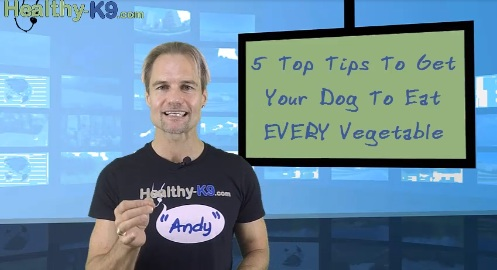 tips for dog owners