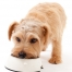 Top 3 Reasons to Start Feeding Your Dog Homecooked Meals
