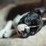 Signs of Brain Cancer in Dogs That You Should Watch Out For