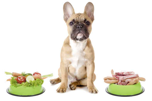 recommended diets for dogs
